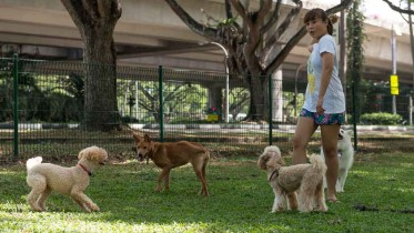doggy_daycare_a