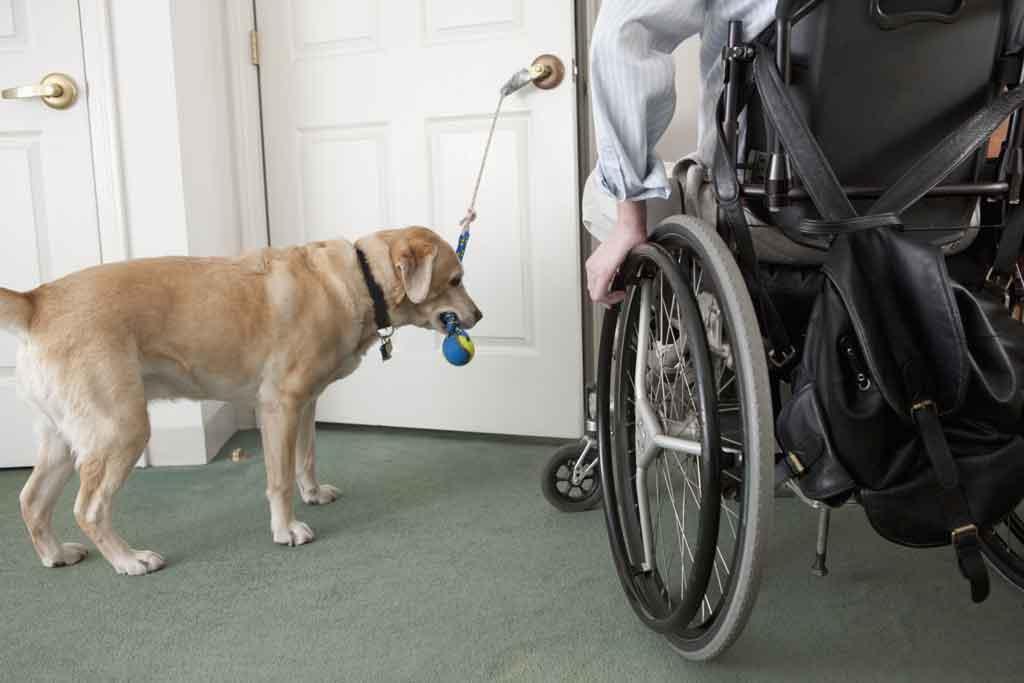 Service Dog To Domestic Dog Population Ratio