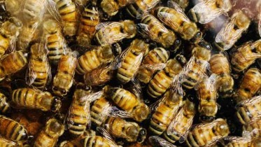 bees_working_w